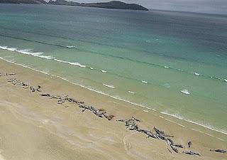 Balene morte sulla spiaggia