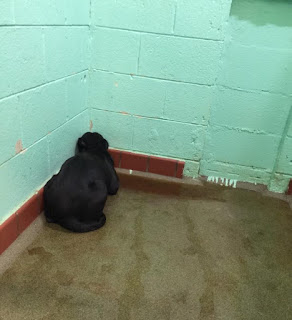 dog abandon at a shelter No life should ever suffer such torment and sorrow.