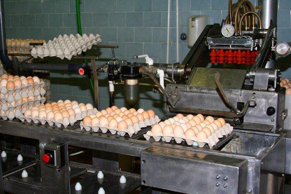 Képtalálatok a következőre: tojás tojás csomagolás https
