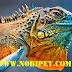 Iguana Reptile – Rồng Nam Mỹ Bò Sát Cảnh đẳng cấp