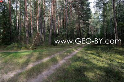 Лесная дорога в Прусиново