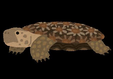 パンケーキリクガメのイラスト