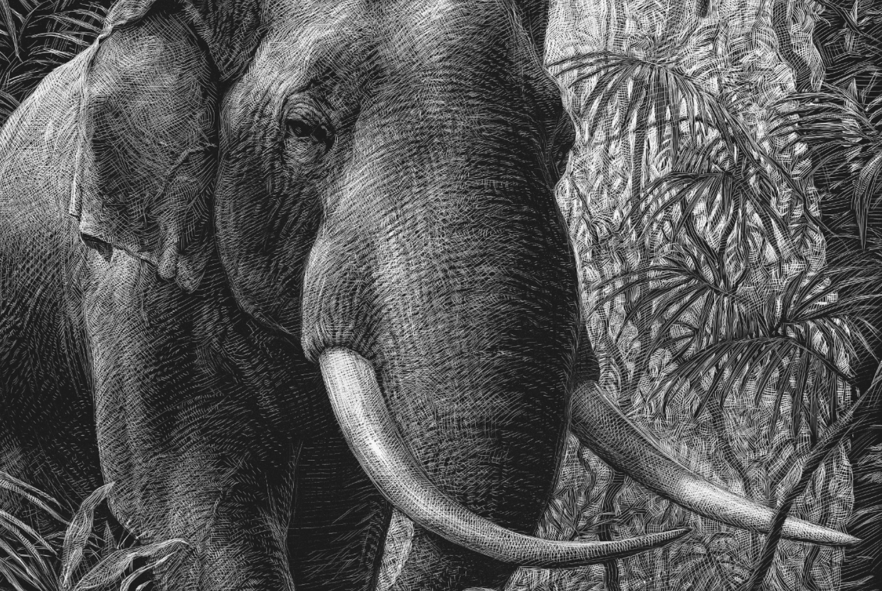 11-Elephant-Detail-Ricardo-Martinez-Wild-Animals-inside-Scratchboard-Drawings-www-designstack-co
