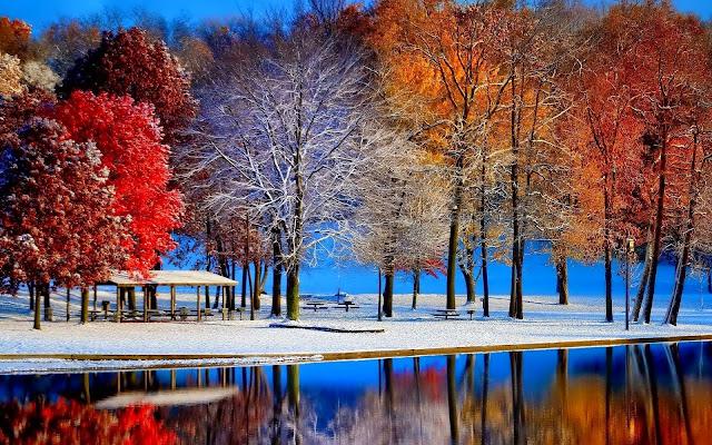 Wallpaper met prachtig gekleurde bomen in de herfst