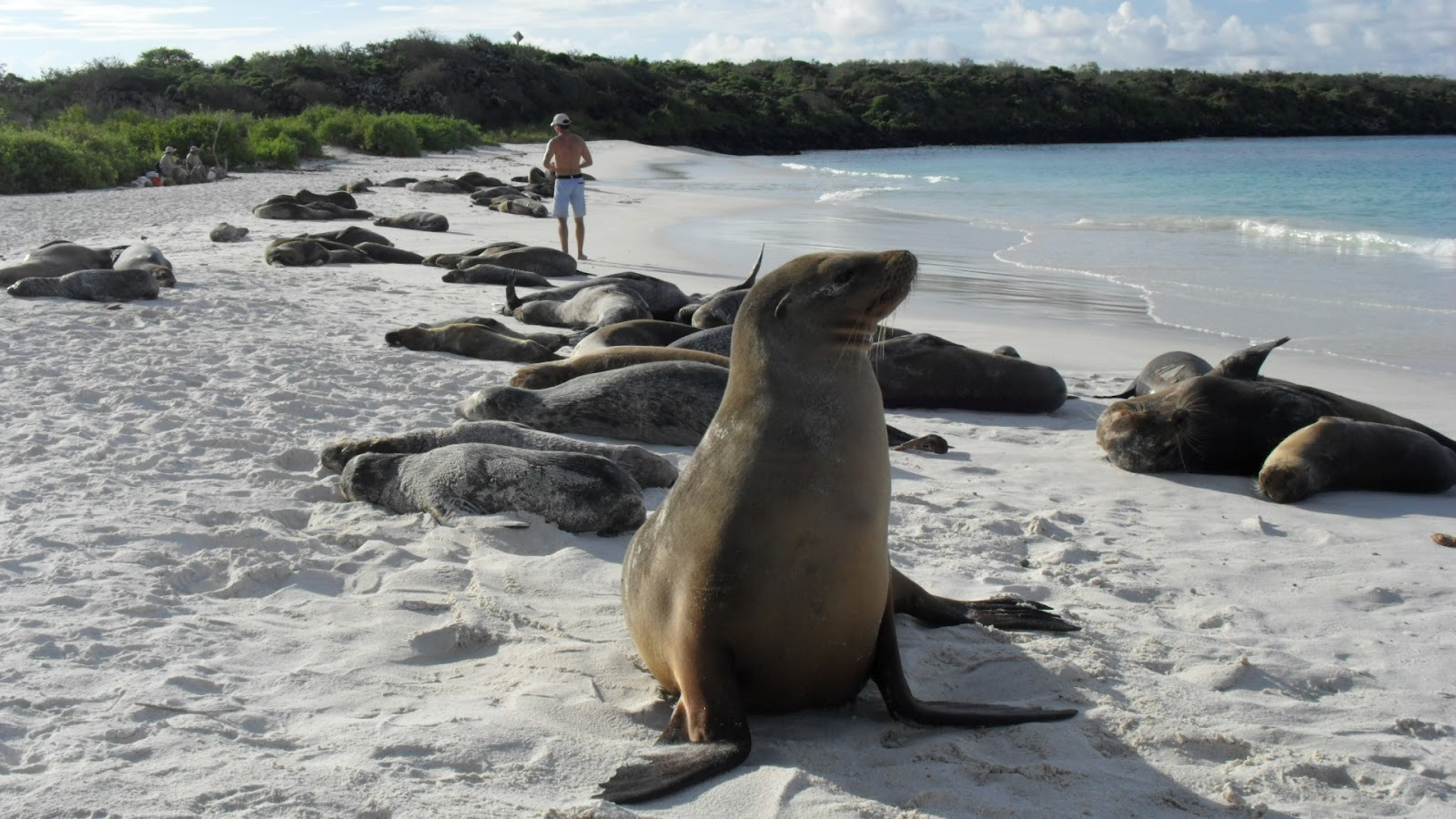 Travel In The Nature Galapagos Islands Travel