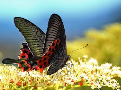 Fotografías de coloridas mariposas de primavera
