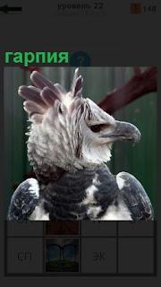Изображение птицы с крупным и крепким клювом гарпия