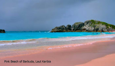Pink Beach of Barbuda, Laut Karibia