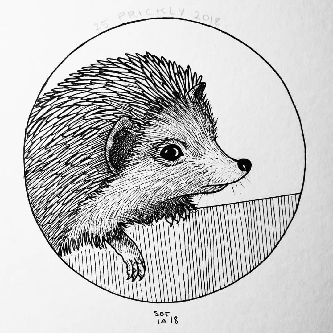02-Hedgehog-Sofia-Härö-Black-and-White-Ink-Animal-Drawings-www-designstack-co