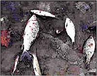 واتضح فيما بعد أنّ سبب ذلك المرض هو تناول السمك الملوّث بكلوريد الزئبق الذي يُلقى ضمن المخلّفات الصناعيّة في مياه خليج مينا ماتا