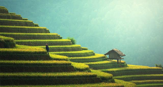 uttarakhand style farm
