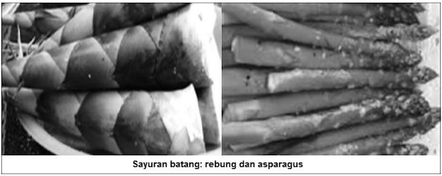 Sayuran batang - rebung dan asparagus - Sayuran batang (stem vegetables) - Jenis Sayuran Berdasarkan Bagian Tanaman yang Dimakan