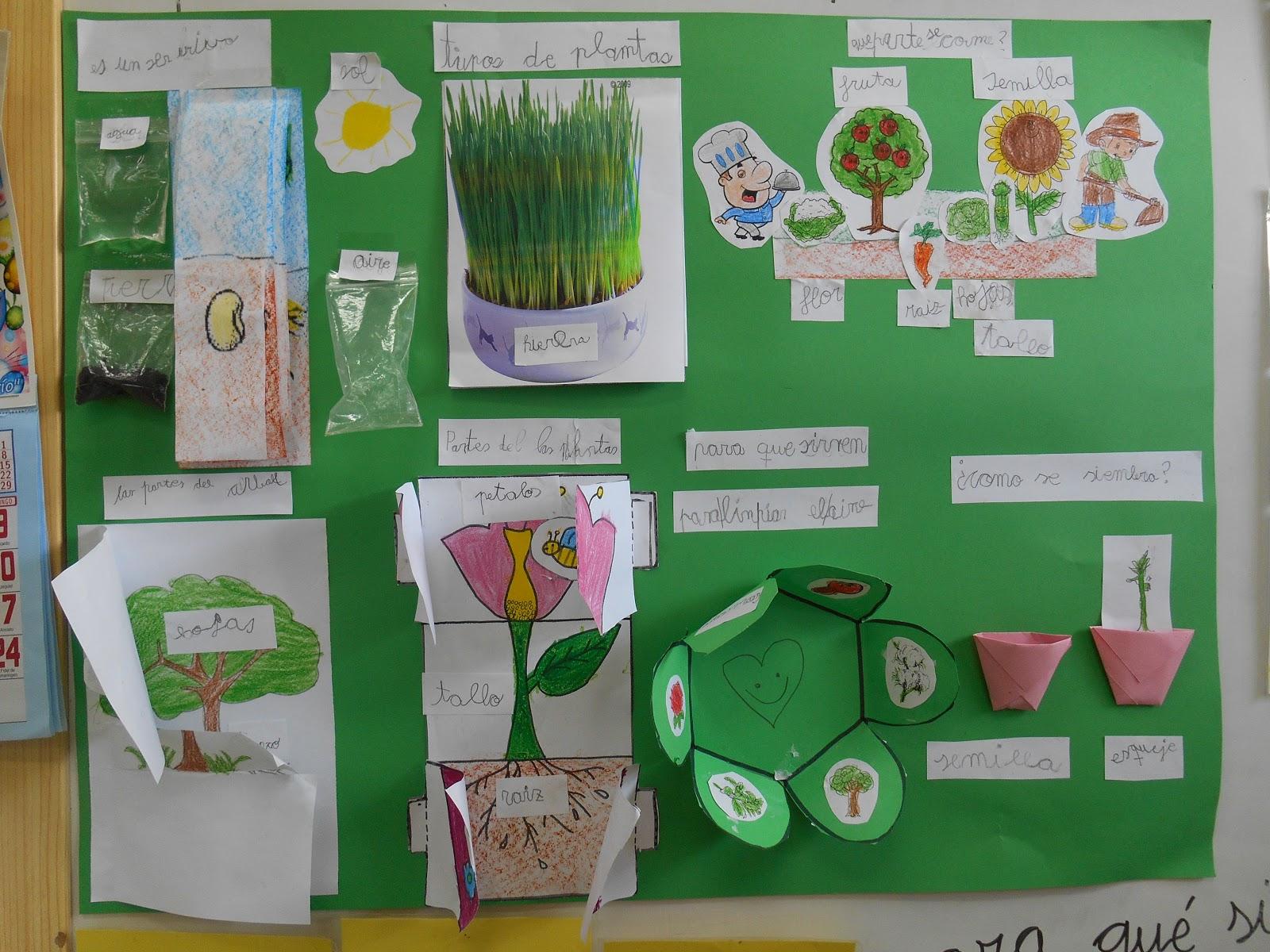 Me acerco a primaria lapbook sobre las plantas for Plantas en la pared
