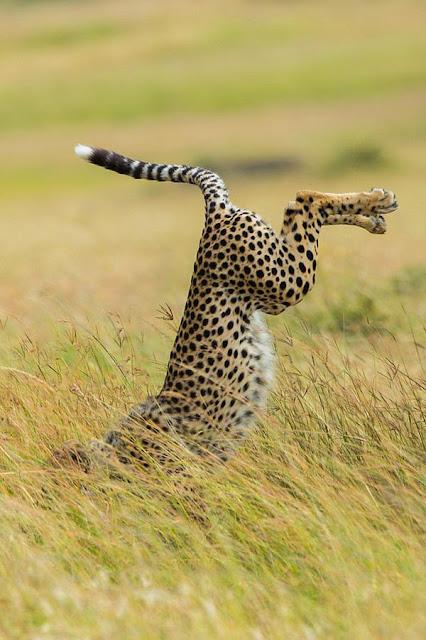 10 động vật hoang dã vẫn đáng yêu như thường dù bị chụp ảnh dìm hàng