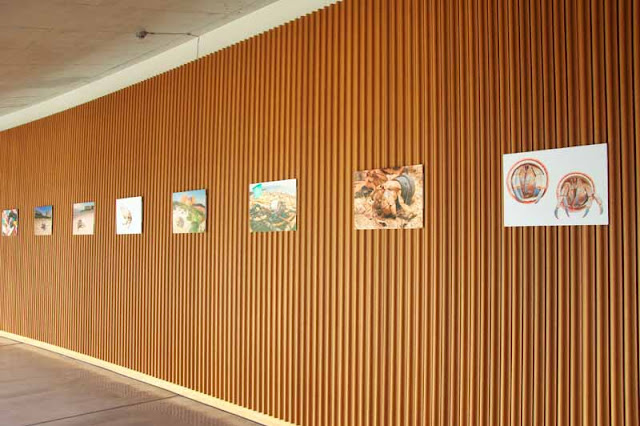 printed photos, exibition, Oiknawa OIST, wall