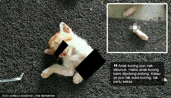Habis Anak Kucing Kami Dipotong Potong The Reporter