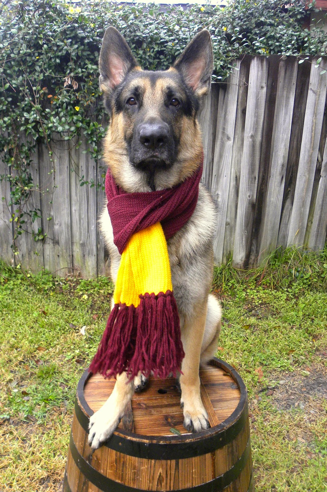 Dress up your pet day - So What Did Your Pet Wear For National Dress Up Your Pet Day Take A Picture And Link It To Blog Paws Wordless Wednesday Hop Below Can T Wait To See It