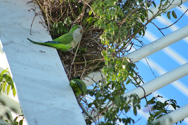 Pássaro no L'Umbracle, na Ciudad das Artes y las Ciencias.