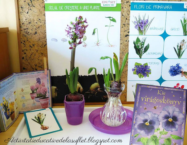 activitate montessori botanica