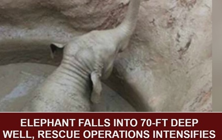 DETAILED REPORT: Elephant falls into 70-ft. deep well, Rescue operations intensifies