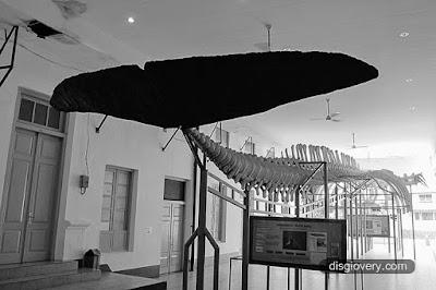 Museum Zoologi Bogor.