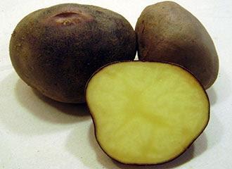 Black potato, Potatoes Peru, 3.000 varieties of potatoe, Peru and the potatoe native