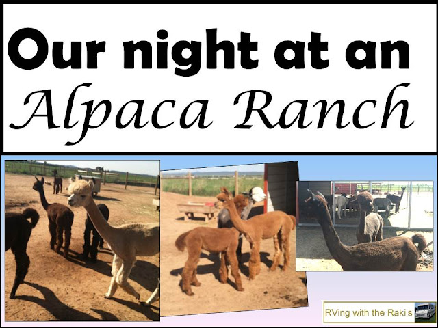 Our Harvest Host experience at Pleasant Journey Alpaca Ranch in Hesperus, Colorado - from Heidi Raki of RVing withe the Rakis