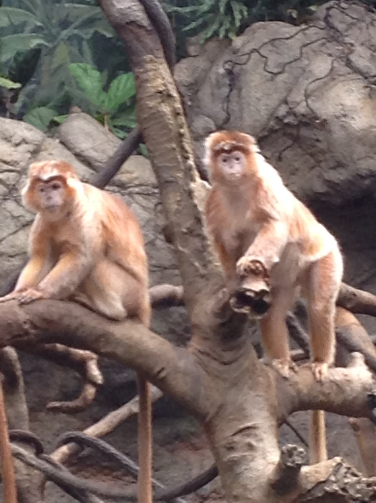 Says Me Says Mom WhereToGo Wednesday Bronx Zoo - The 12 best zoos in the world