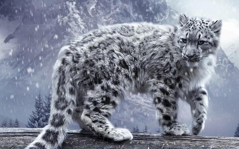 El leopardo de las nieves, onza o irbis (Panthera uncia) es una especie de mamífero carnívoro de la familia Felidae propia de las montañas de Asia Central. Viven en montañas remotas a altitudes de hasta 6000 m, motivo por el cual es poco lo que se sabe de ellos.