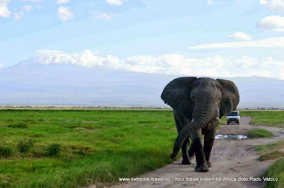 un elefant mergand pe drumul circulat de masini