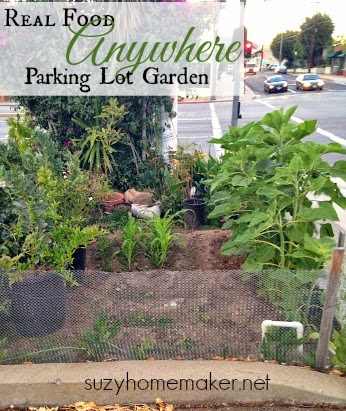 real food anywhere - parking lot garden | suzyhomemaker.net