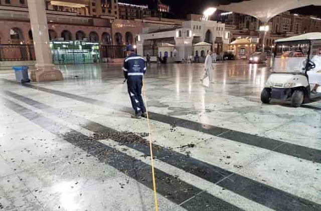 MADINA'S GRAND MOSQUE INFESTED WITH BLACK CRICKETS & SWARMS