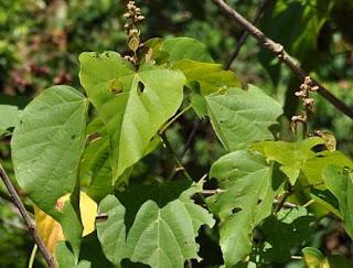timaha-www.healthnote25.com