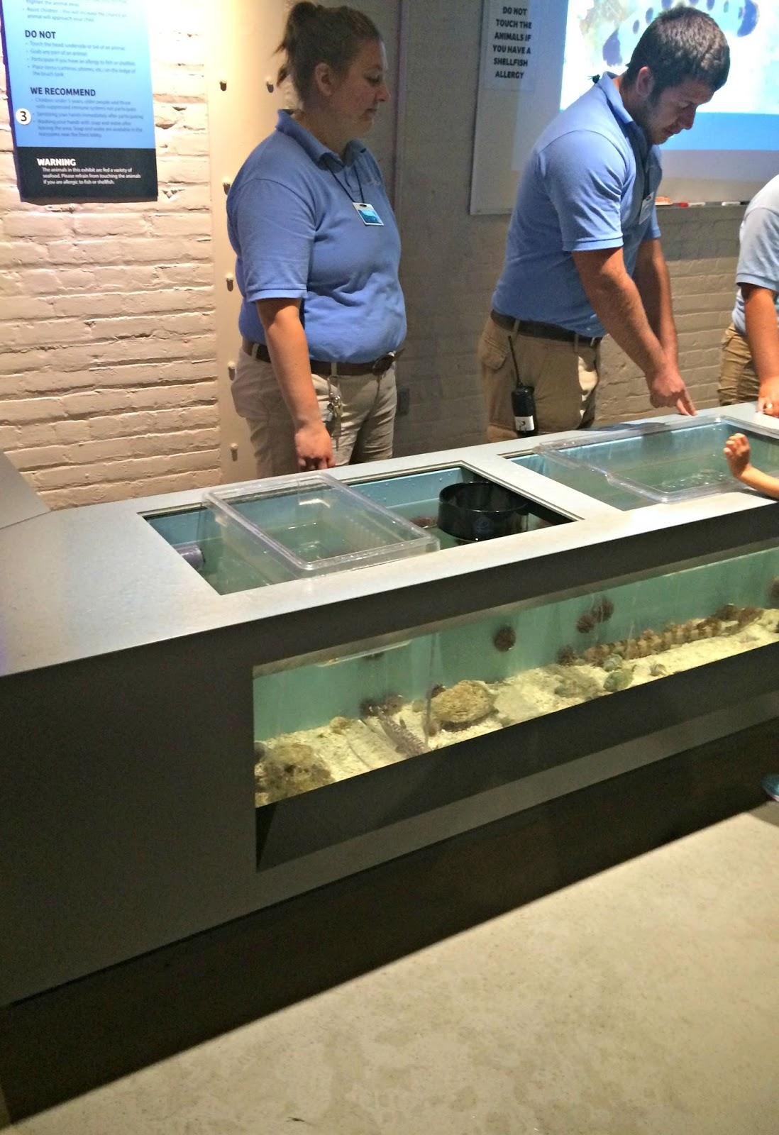 A GEEK DADDY: Sea-ing the new Toledo Zoo Aquarium is Fin-tastic