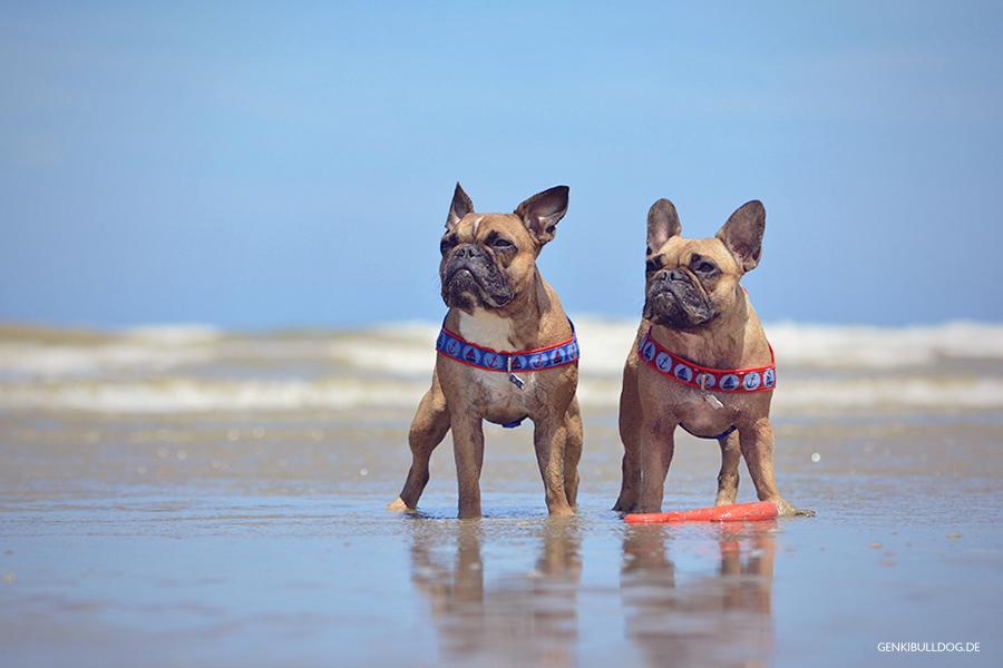 Hundeblog Genki Bulldog Normandieurlaub mit Hund in Saint-Aubin-sur-Mer Normandieurlaub