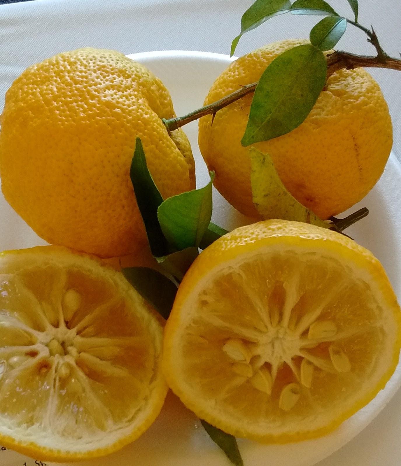 Hardy Citrus: Yuzu