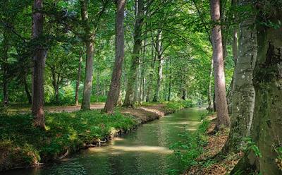 ต้นไม้ริมน้ำ(คลอง)