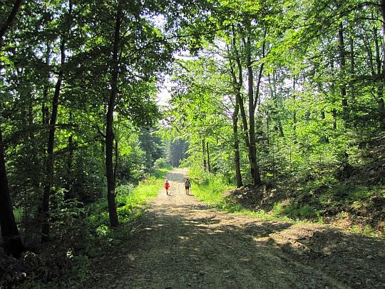 Szlak przez Suchą Górę.