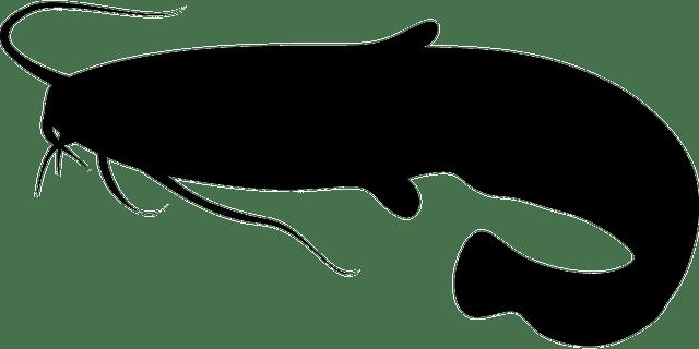 Cara Ternak Lele Yang Baik Dan Menguntungkan Untuk Pemula