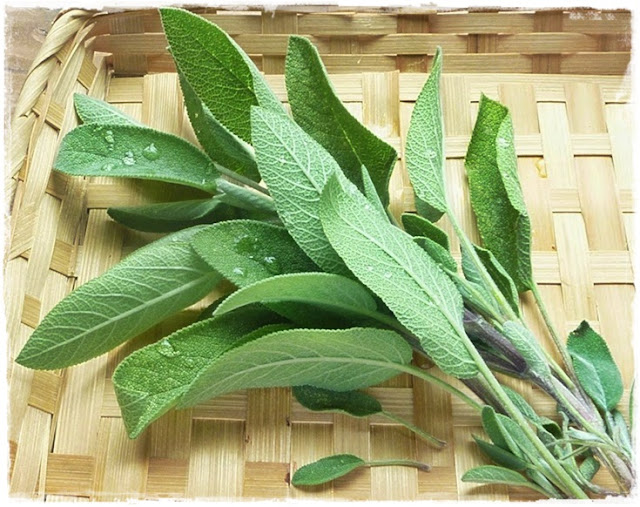 cooking-with-sage