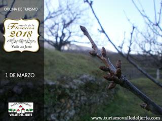Cerezo en Flor Valle del Jerte. 1 de marzo 2018