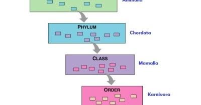 Setelah domain adalah kerajaan, yang dibagi lagi menjadi filum, kelas, order, families, marga, dan spesies. Taksonomi Hewan ~ MARI BERBAGI ILMU