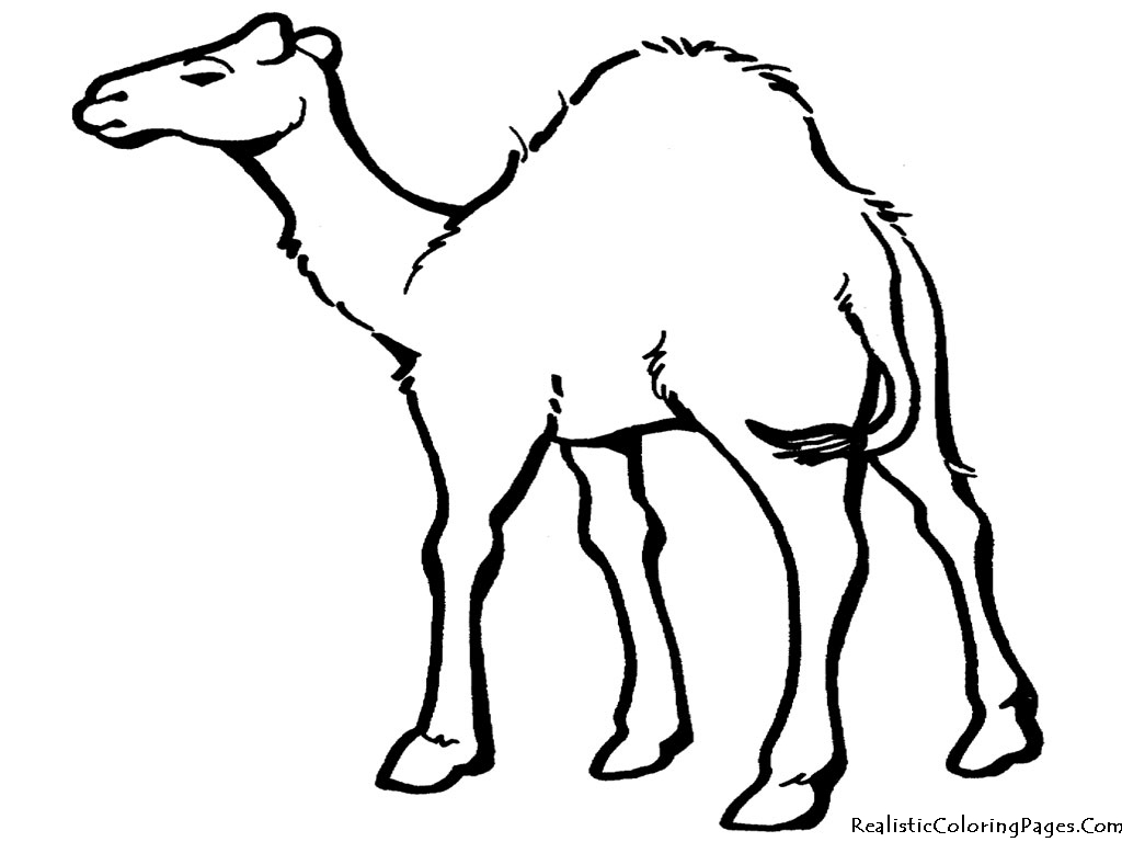 camel coloring pages realistic coloring pages. Black Bedroom Furniture Sets. Home Design Ideas