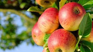 10 Cara Meningkatkan Metabolisme Tubuh dengan Makanan