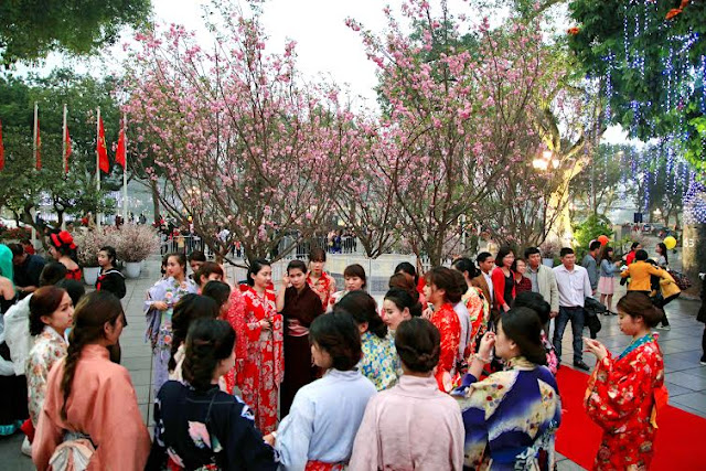 Japanese cherry flowers to be showcased in Ha Noi