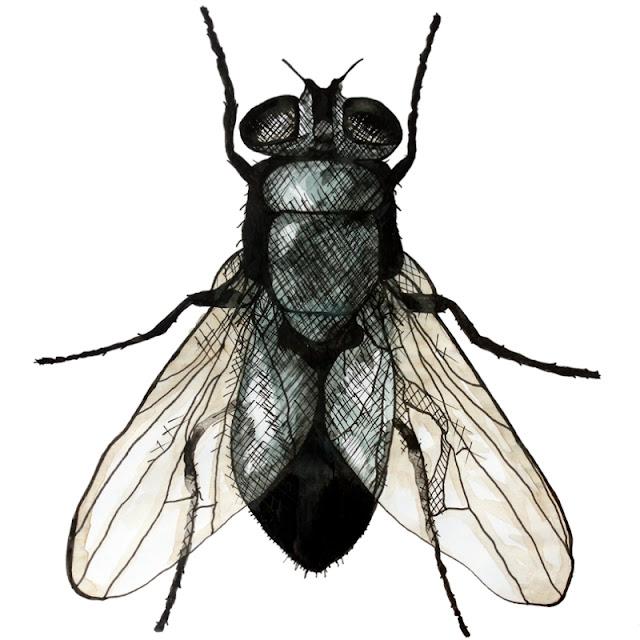 SMK: Liv og døden - flue