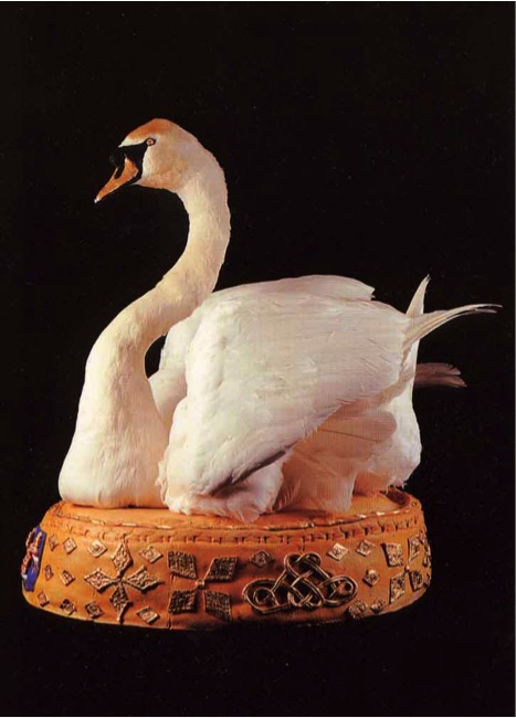 what-happens-when-we-hunt-and-eat-swans