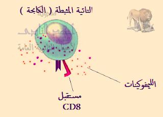 تركيب الجهاز المناعى فى الإنسان - المواد الكيميائية المساعدة - الليمفوكينات - التائية المثبطة او الكابحة
