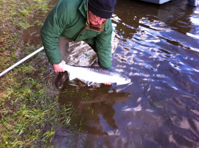 Salmon Fishing Scotland Superb Spring Salmon Fishing on Stanley beats of the Tay, Perthshire, Scotland.