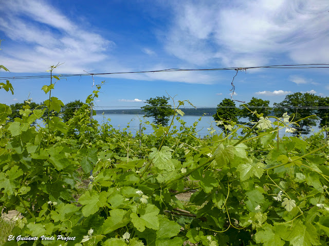 Cayuga Lake wineyard - Finger Lakes, NY por El Guisante Verde Project